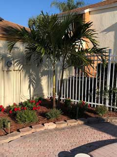 raintree-pool-palm